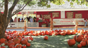 The Picture-Perfect Pumpkin Patch In Southern California That Is Right Out Of A Fairytale