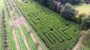 Get Lost In This Awesome 5-Acre Corn Maze In Connecticut This Autumn