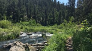 The Shady, Creekside Trail In South Dakota You'll Want To Hike Again And Again