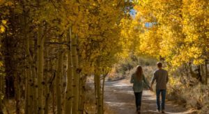 The Awesome Hike That Will Take You To The Most Spectacular Fall Foliage In Northern California