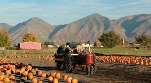 This Rural Fall Festival In Utah Should Go On Your Bucket List This Season
