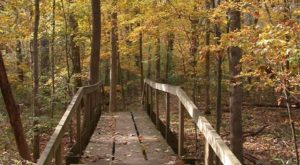 This Easy Fall Hike In Louisiana Is Under 2 Miles And You'll Love Every Step You Take