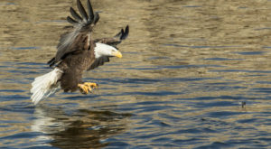 This Louisiana State Park Is A Haven For Bald Eagles And You Need To See It