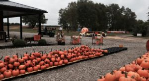 This 50-Acre Pumpkin Farm In Ohio Is The Classic Fall Experience You Need
