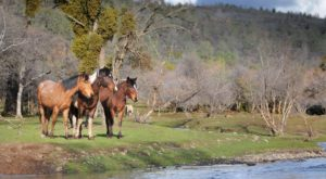 A Visit To This Wild Horse Sanctuary In Northern California Will Sweep You Off Your Feet
