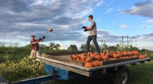 A Trip To This Charming Cincinnati Area Pumpkin Patch Makes For An Excellent Fall Outing