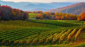 Why This Scenic North Carolina Town Could Soon Be The Next Napa Valley