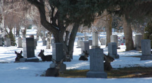 You Might Just Spot A Ghost At The Most Haunted Cemetery In Utah