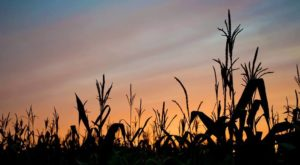 Take Part In A Spooky Challenge By Exploring This Corn Maze In Maine At Night