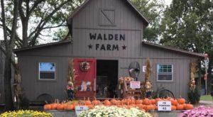 The Farm Near Nashville That Transforms Into A Halloween Wonderland Each Year