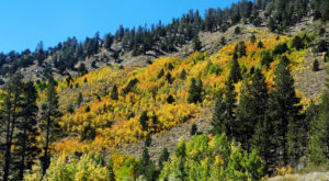 This 2-Hour Drive Through Northern California Is The Best Way To See This Year's Fall Colors