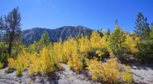 This 2-Hour Drive Through Nevada Is The Best Way To See This Year's Fall Colors
