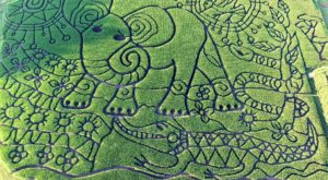 Get Lost In This Awesome 15-Acre Corn Maze In Wisconsin This Autumn