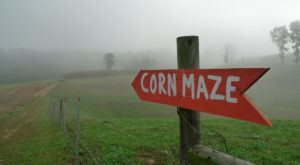 Get Lost In This Awesome 7-Acre Corn Maze In North Carolina This Autumn