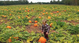 This Bountiful Pumpkin Farm In South Carolina Is The Classic Fall Experience You Need