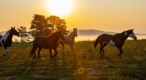 You May Be Surprised To Learn That South Dakota Is Home To One Of The Largest Wild Horse Sanctuaries In The Country