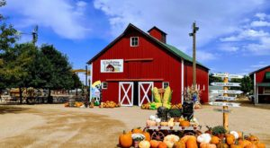 The Charming Farm Festival In Colorado That Will Make Your Fall Complete