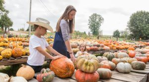 You'll Find Every Pumpkin Imaginable At This One Arkansas Farm