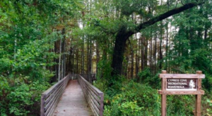 The One-Of-A-Kind Park In Mississippi Where You Can See Alligators Up Close