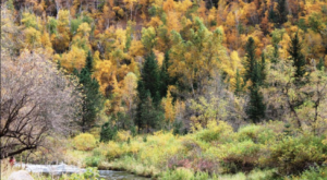 This 2-Hour Drive Through South Dakota Is The Best Way To See This Year's Fall Colors