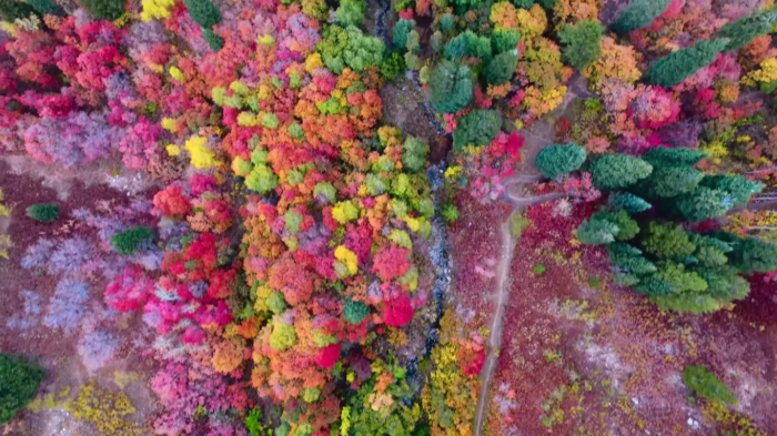 The Gorgeous Footage Of America's Fall Foliage That Will Leave You In Awe