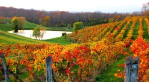 Cincinnati Was Named One Of The Best Wine Cities In America And We Couldn't Agree More