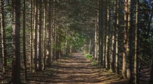 This 3-Mile Hike In Rhode Island Takes You Through An Enchanting Forest