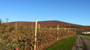 Pick Your Own Apples At This Charming Farm Hiding In Maryland