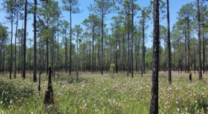 Everyone Should Explore This Beautiful Bog Preserve In Alabama At Least Once