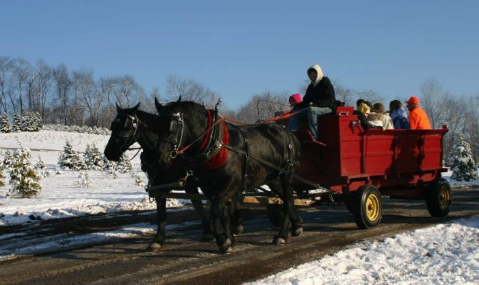 Fleming's: The Charming Christmas Farm Near Pittsburgh ...