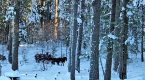 Take A Horse Drawn Carriage Ride Through Northern California's Oldest Trees This Holiday Season