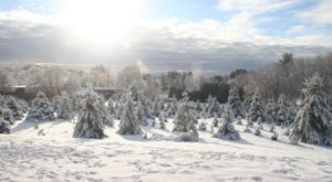 This Christmas Tree Farm In Massachusetts Is Like Walking In A Winter Wonderland