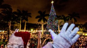 The Magical Florida Christmas Tree That Comes Alive With A Million Colorful Lights
