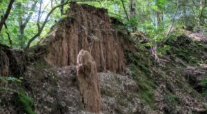 Hike This Ancient Forest In Mississippi That's Home To 36-Million-Year-Old Trees