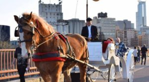 Take A Horse Drawn Carriage Ride In Minnesota For A Night Of Pure Wonder