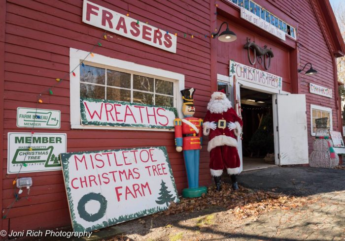 Facebook/Mistletoe Christmas Tree Farm - Mistletoe Christmas Tree Farm In Massachusetts Is The Best