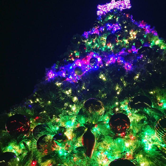 Busch Gardens In Williamsburg Transforms Into A Winter Wonderland