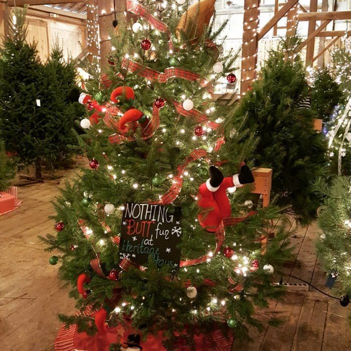 The Tradition Of Christmas Trees: The Amana Tannenbaum Forest Is Iowa's Best Holiday Tree Trail