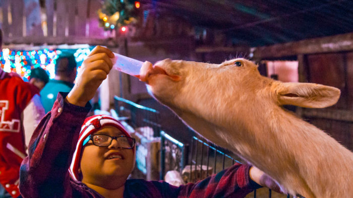 Hollywild's Drive-Thru Christmas Safari In South Carolina Is The Most Unique Light Show You'll See