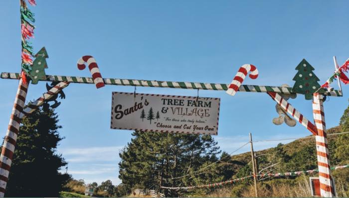 Half Moon Bay Christmas Tree Farm