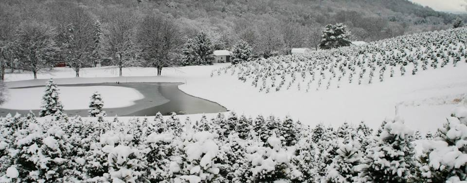 Fleming's: The Charming Christmas Farm Near Pittsburgh Where You Can Cut Your Own Tree
