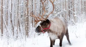 Go Walking With Reindeer In Alaska For An Adventure Unlike Any Other