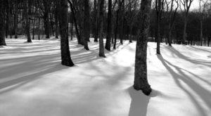 10 Wintertime Struggles Only True Nashvillians Can Fully Appreciate