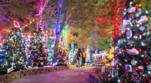 This Magical Forest In Nevada Will Make You Feel Like You're In A Winter Wonderland