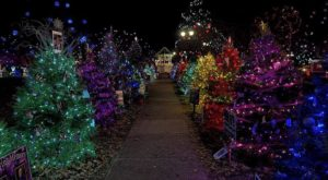 This Christmas Tree Trail In Ohio Is Like Walking In A Winter Wonderland