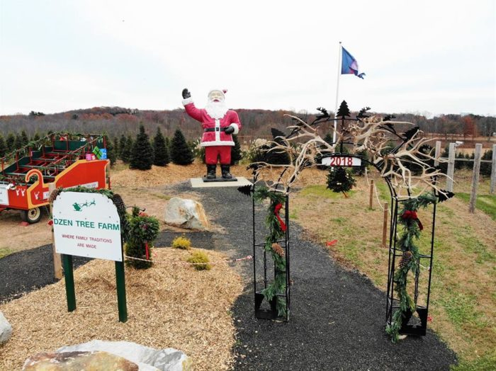 Dzen Tree Farm: A Gigantic Christmas Tree Farm To Visit In