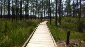 These 8 Incredible Hikes That Are Just A Short Drive From New Orleans