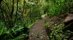 A Hike Through This Lush Hawaiian Valley Is Perfect For The Adventurous Soul