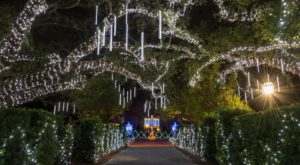 The Mesmerizing Christmas Display In New Orleans With Over Half A Million Glittering Lights