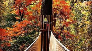 The Treetop Trail That Will Show You A Side Of Missouri You've Never Seen Before